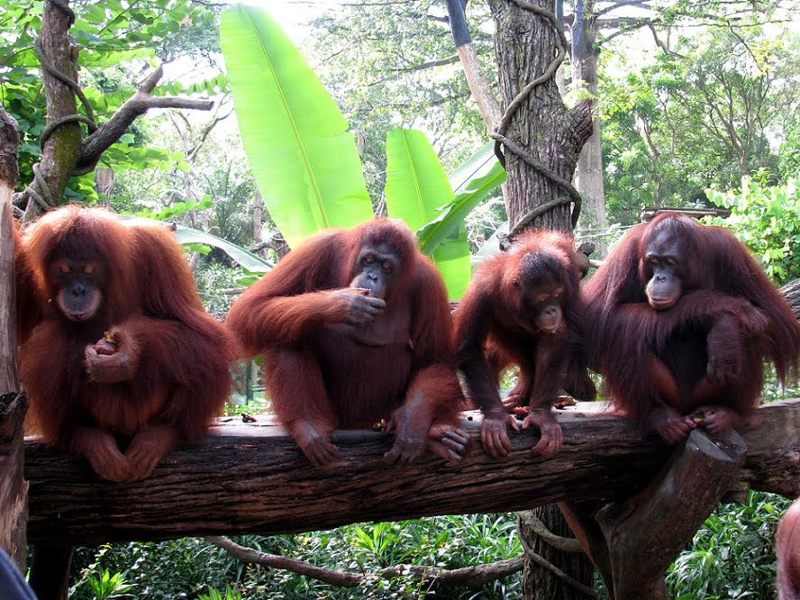 singapore-travel-zoo-animals-glimpses-of-the-world