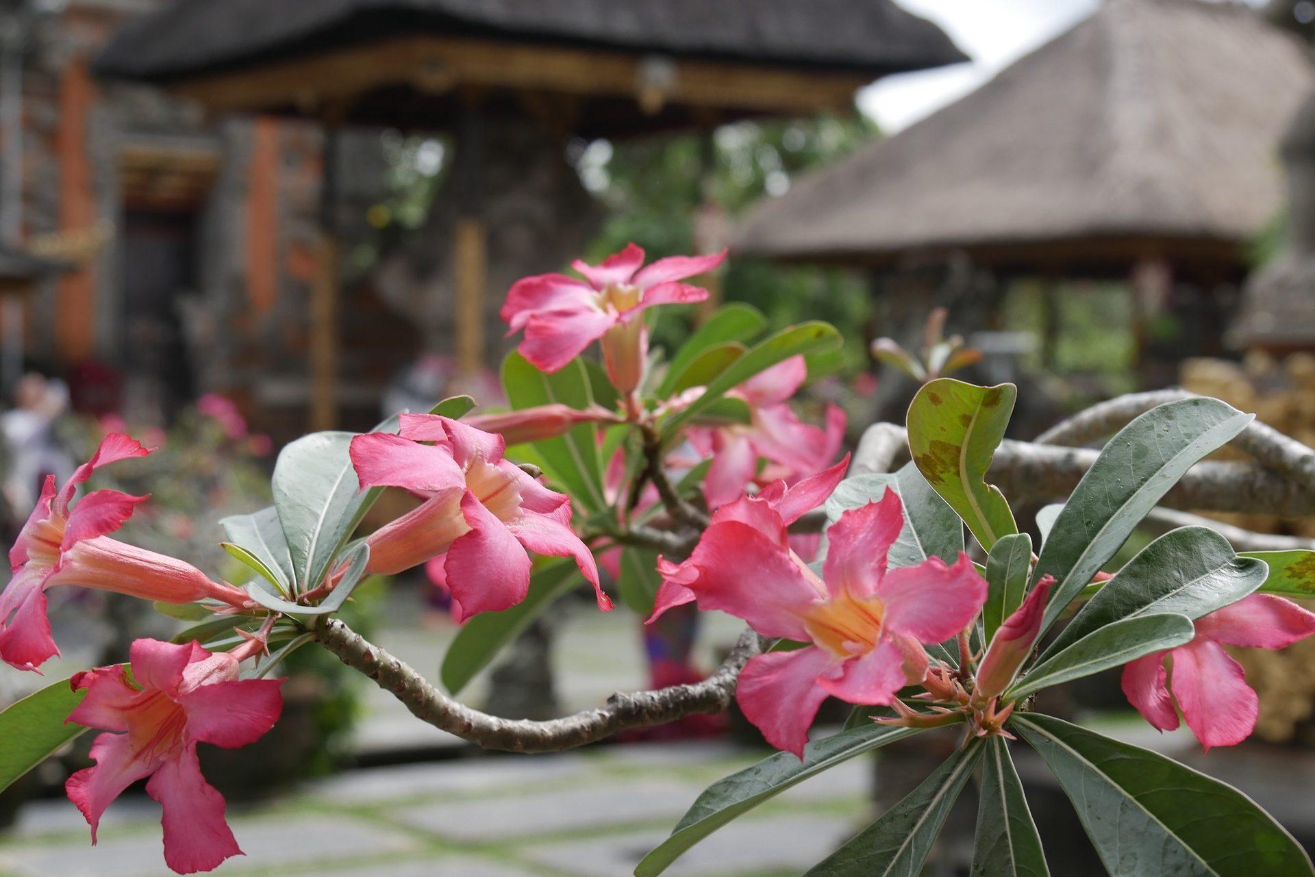 Bali-travel-stories