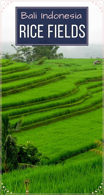 Travel-to-Bali-rice-fields-Glimpses-of-The-World