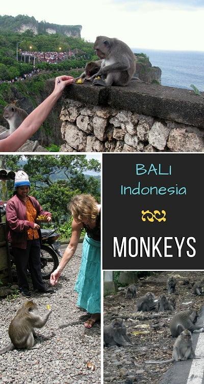 Travel-to-Bali-monkeys-Glimpses-of-The-World