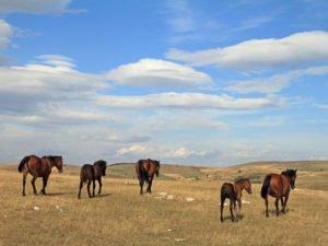 Pester-plateau-Serbia-Glimpses-of-the-World